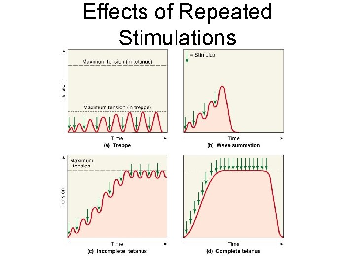 Effects of Repeated Stimulations