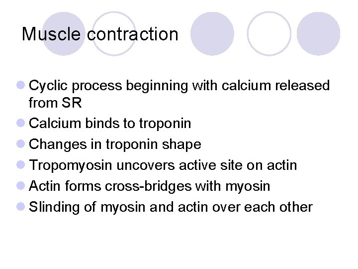 Muscle contraction l Cyclic process beginning with calcium released from SR l Calcium binds