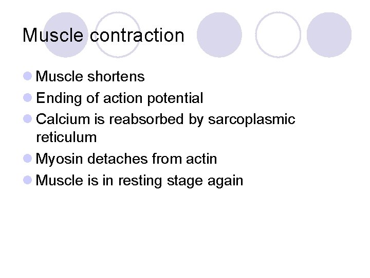 Muscle contraction l Muscle shortens l Ending of action potential l Calcium is reabsorbed