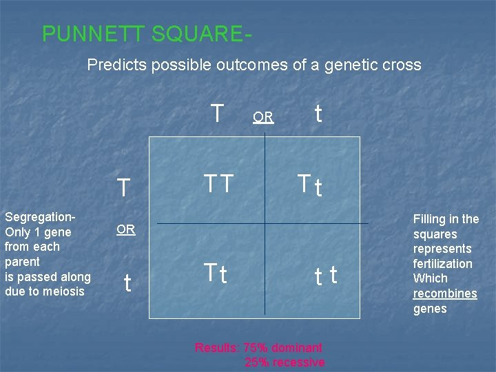 PUNNETT SQUAREPredicts possible outcomes of a genetic cross T T Segregation. Only 1 gene