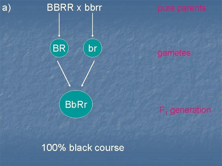 a) BBRR x bbrr BR br Bb. Rr 100% black course pure parents gametes