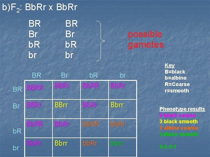 b)F 2: Bb. Rr x Bb. Rr BR Br b. R br BR BR