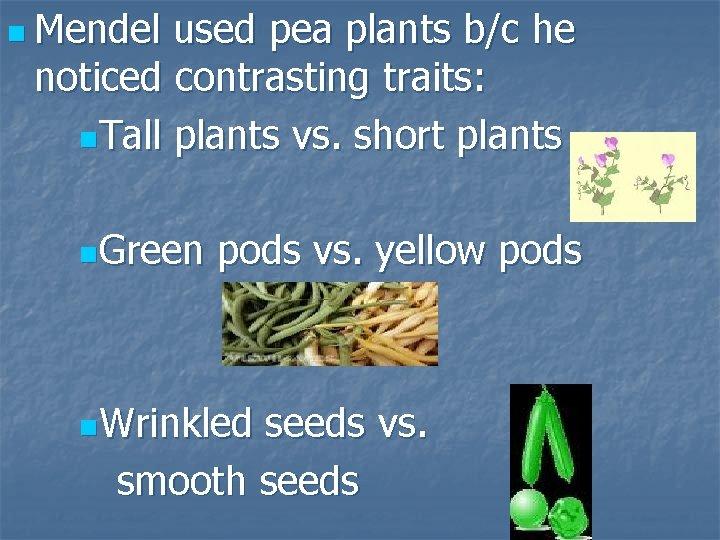 n Mendel used pea plants b/c he noticed contrasting traits: n. Tall plants vs.