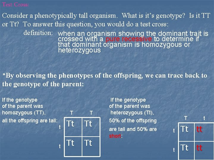 Test Cross: Consider a phenotypically tall organism. What is it's genotype? Is it TT