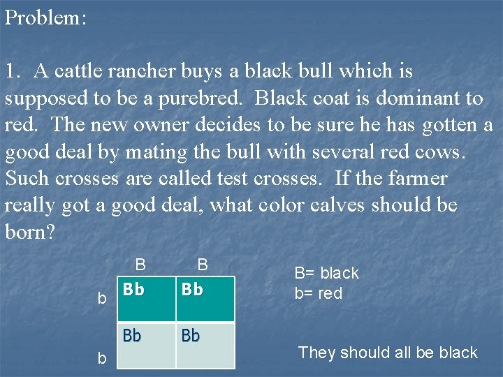 Problem: 1. A cattle rancher buys a black bull which is supposed to be