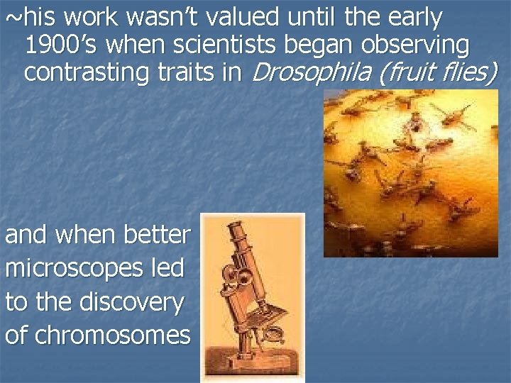 ~his work wasn't valued until the early 1900's when scientists began observing contrasting traits