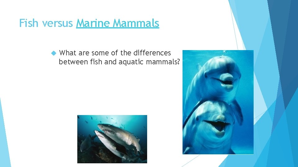 Fish versus Marine Mammals What are some of the differences between fish and aquatic