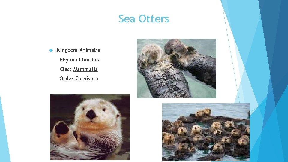 Sea Otters Kingdom Animalia Phylum Chordata Class Mammalia Order Carnivora