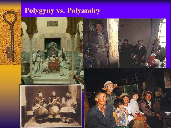 Polygyny vs. Polyandry