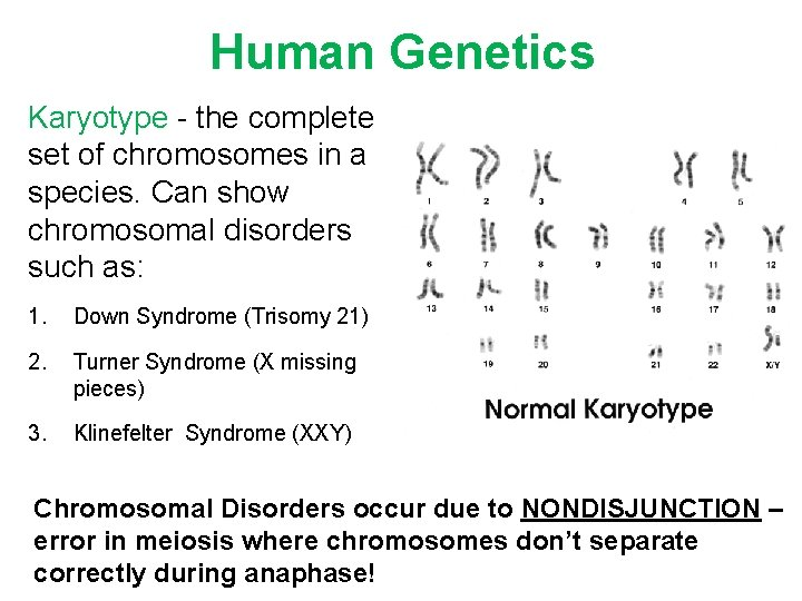 Human Genetics Karyotype - the complete set of chromosomes in a species. Can show