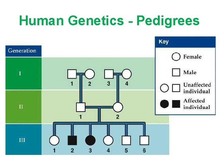 Human Genetics - Pedigrees