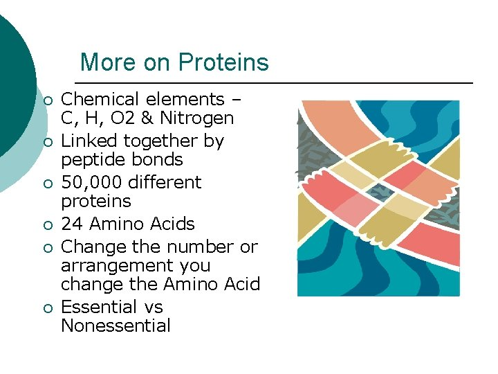 More on Proteins ¡ ¡ ¡ Chemical elements – C, H, O 2 &
