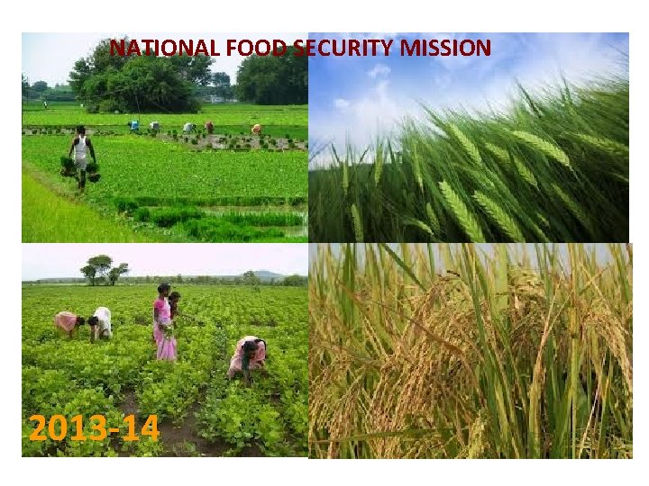 NATIONAL FOOD SECURITY MISSION 2013 -14
