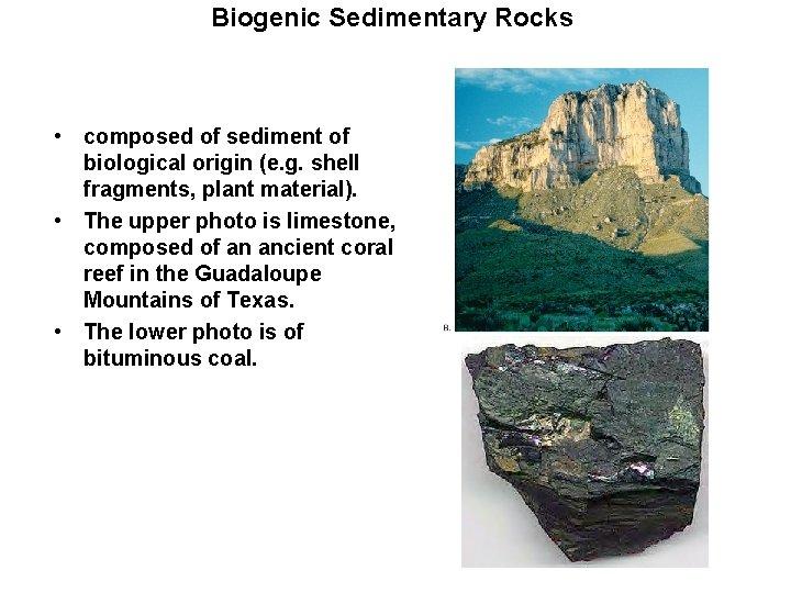 Biogenic Sedimentary Rocks • composed of sediment of biological origin (e. g. shell fragments,