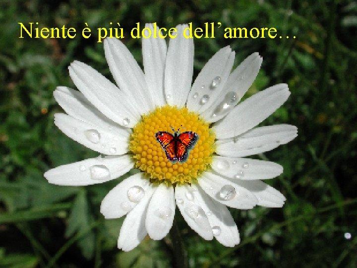 Niente è più dolce dell'amore…