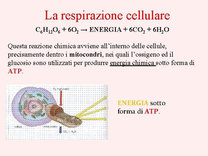 La respirazione cellulare C 6 H 12 O 6 + 6 O 2 →