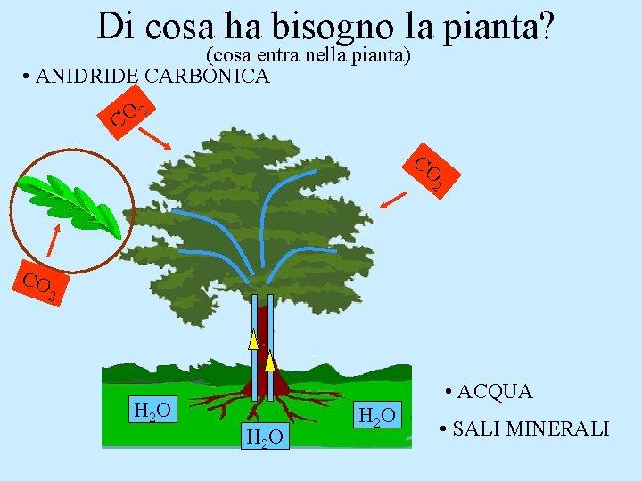 Di cosa ha bisogno la pianta? (cosa entra nella pianta) • ANIDRIDE CARBONICA 2