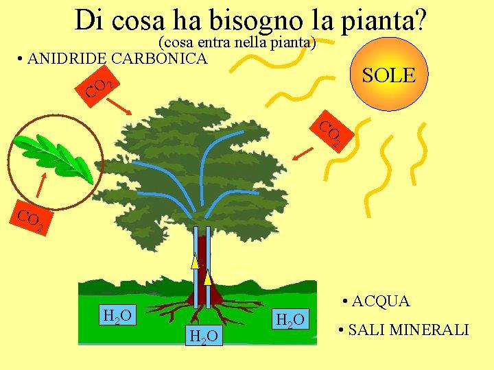Di cosa ha bisogno la pianta? (cosa entra nella pianta) • ANIDRIDE CARBONICA SOLE