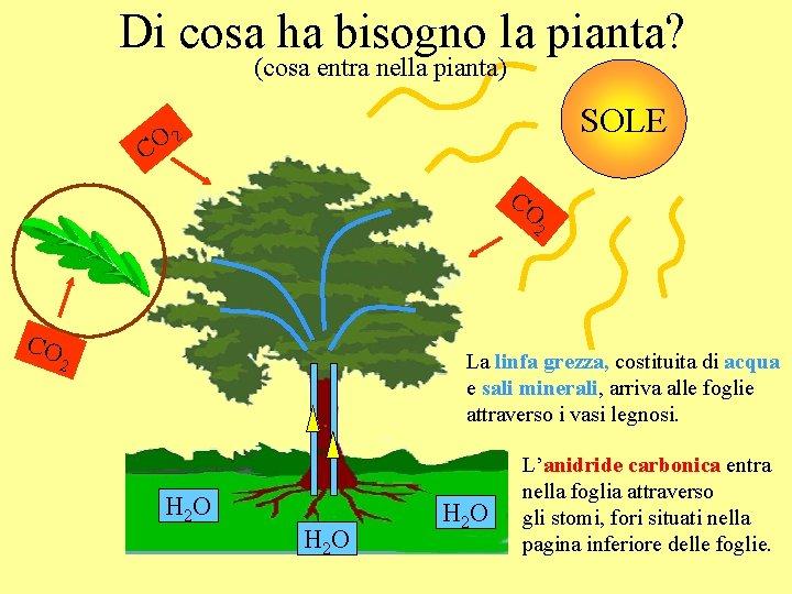 Di cosa ha bisogno la pianta? (cosa entra nella pianta) SOLE O 2 C