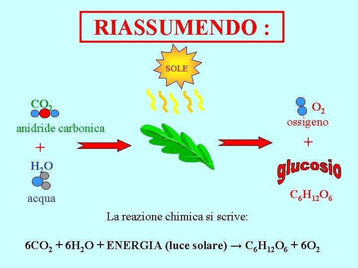 RIASSUMENDO : SOLE CO 2 ossigeno anidride carbonica + + H 2 O C