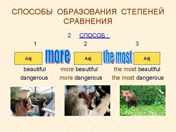 СПОСОБЫ ОБРАЗОВАНИЯ СТЕПЕНЕЙ СРАВНЕНИЯ 2 1 Adj beautiful dangerous СПОСОБ : 2 Adj more