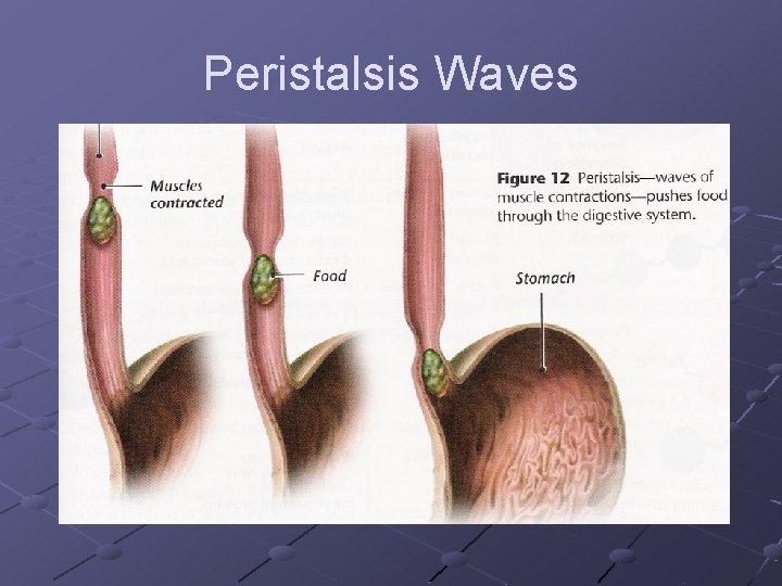 Peristalsis Waves