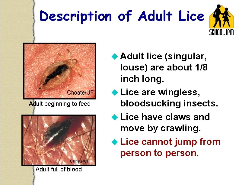 Description of Adult Lice u Adult beginning to feed Adult full of blood lice