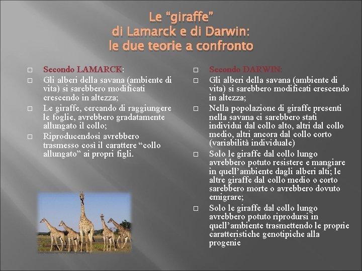 """Le """"giraffe"""" di Lamarck e di Darwin: le due teorie a confronto Secondo LAMARCK:"""