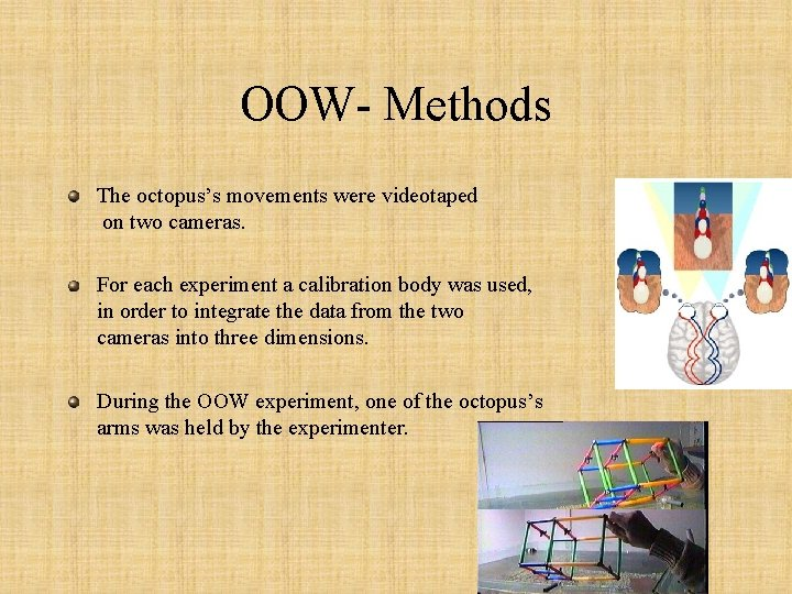 OOW- Methods The octopus's movements were videotaped on two cameras. For each experiment a