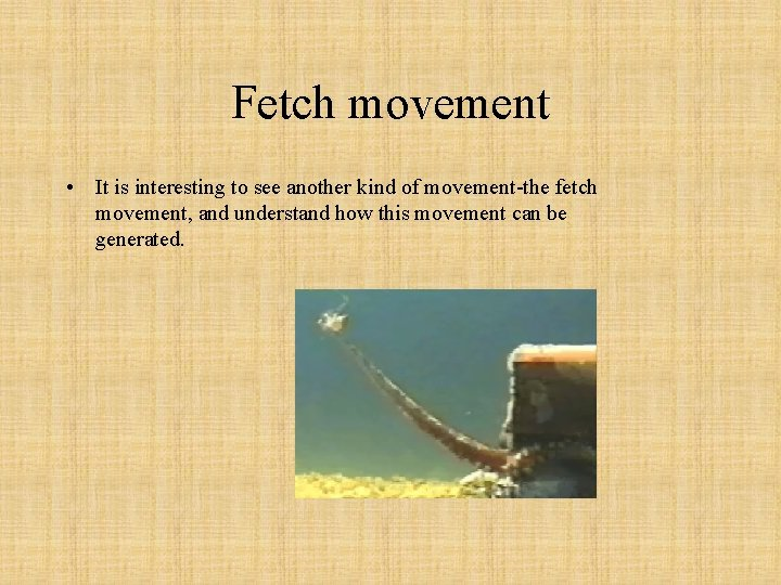Fetch movement • It is interesting to see another kind of movement-the fetch movement,
