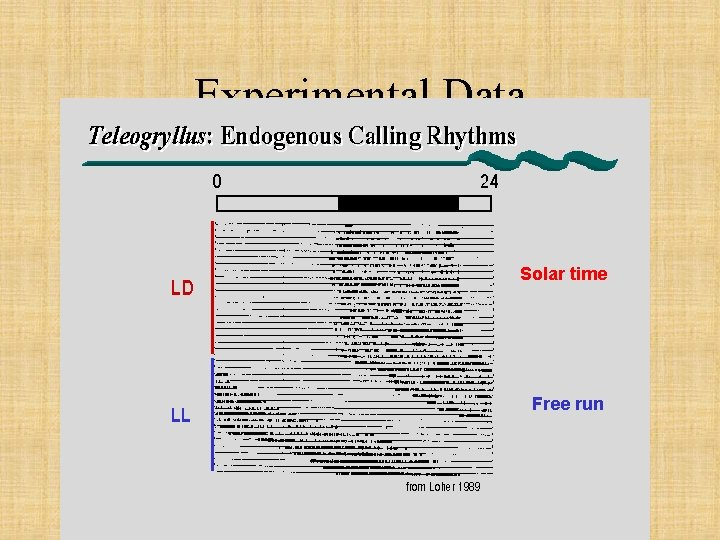 Experimental Data Solar time Free run