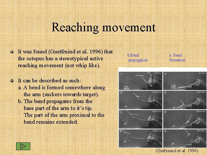 Reaching movement It was found (Guetfruind et al. 1996) that the octopus has a