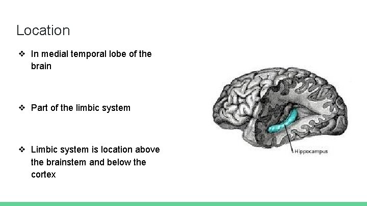 Location ❖ In medial temporal lobe of the brain ❖ Part of the limbic