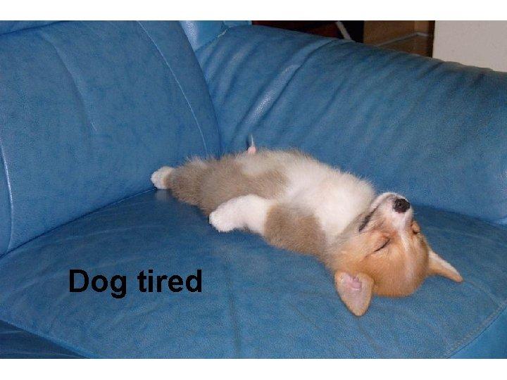 Dog tired
