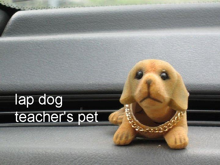 lap dog teacher's pet