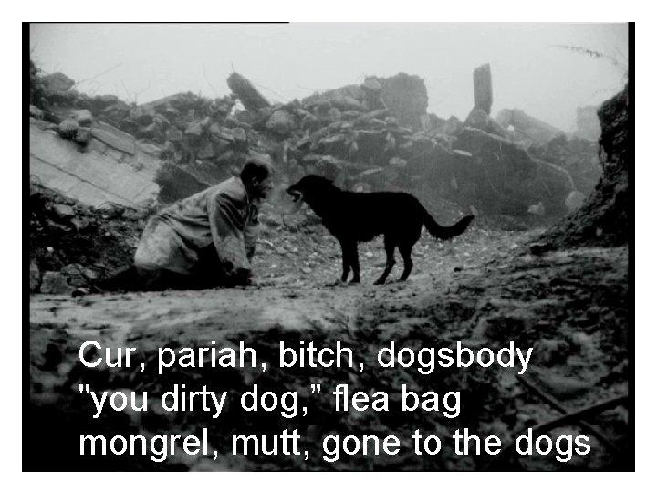 """Cur, pariah, bitch, dogsbody """"you dirty dog, """" flea bag mongrel, mutt, gone to"""