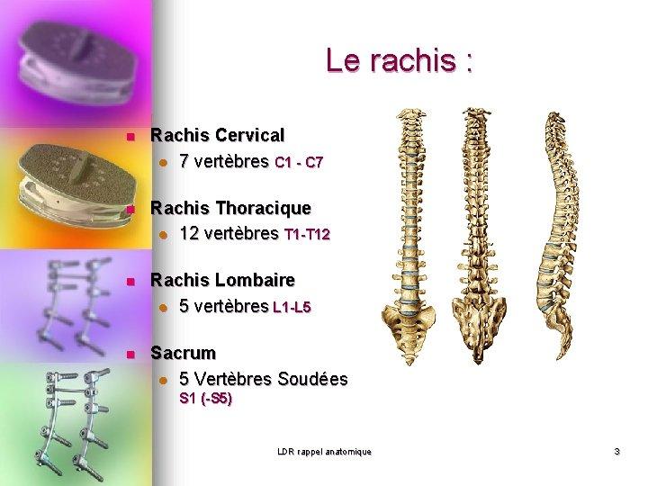 Le rachis : n Rachis Cervical l 7 vertèbres C 1 - C 7