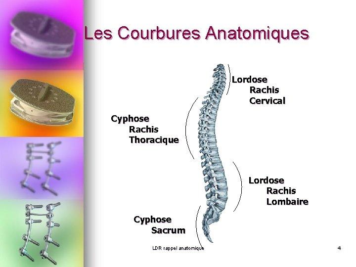Les Courbures Anatomiques Lordose Rachis Cervical Cyphose Rachis Thoracique Lordose Rachis Lombaire Cyphose Sacrum