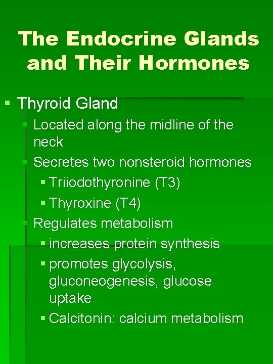 The Endocrine Glands and Their Hormones § Thyroid Gland § Located along the midline