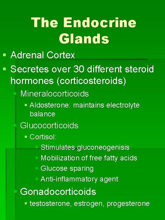 The Endocrine Glands § Adrenal Cortex § Secretes over 30 different steroid hormones (corticosteroids)