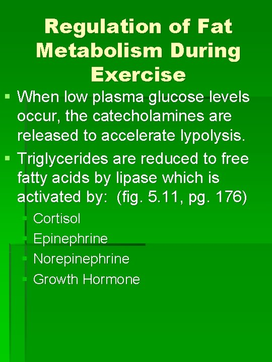 Regulation of Fat Metabolism During Exercise § When low plasma glucose levels occur, the