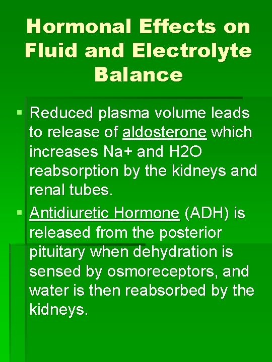 Hormonal Effects on Fluid and Electrolyte Balance § Reduced plasma volume leads to release