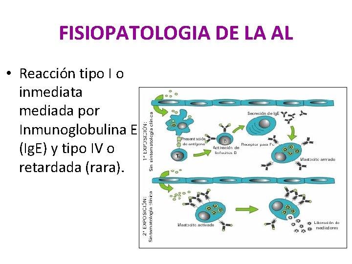 FISIOPATOLOGIA DE LA AL • Reacción tipo I o inmediata mediada por Inmunoglobulina E