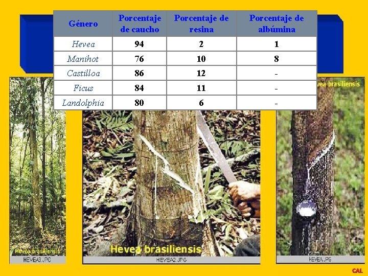 Género Porcentaje de caucho Porcentaje de resina Porcentaje de albúmina Hevea 94 2 1