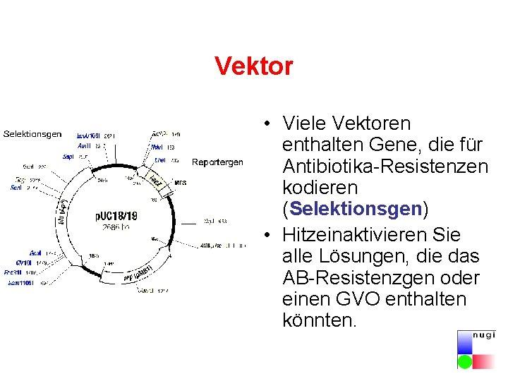 Vektor • Viele Vektoren enthalten Gene, die für Antibiotika-Resistenzen kodieren (Selektionsgen) • Hitzeinaktivieren Sie