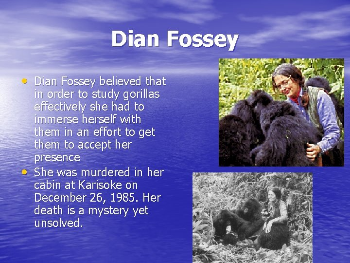 Dian Fossey • Dian Fossey believed that • in order to study gorillas effectively
