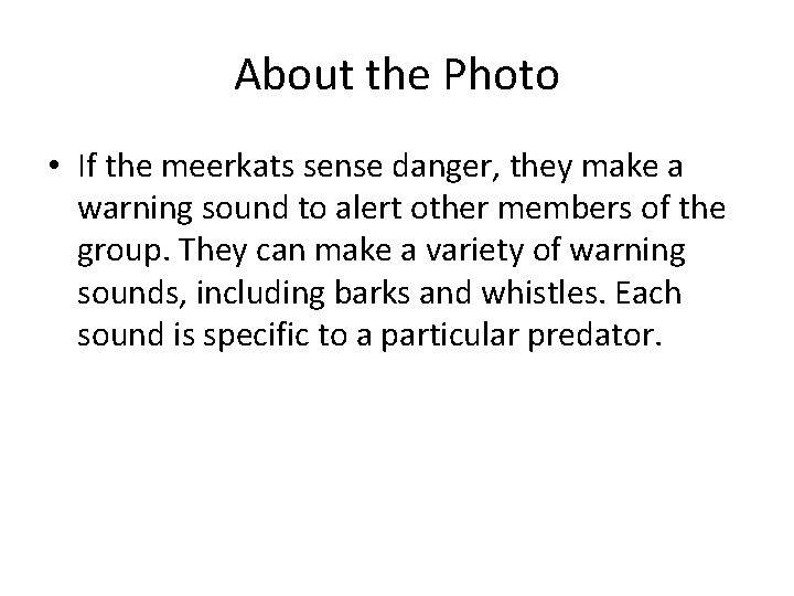 About the Photo • If the meerkats sense danger, they make a warning sound