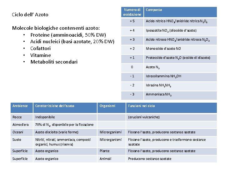 Numero di ossidazione Ciclo dell' Azoto Molecole biologiche contenenti azoto: • Proteine (amminoacidi, 50%