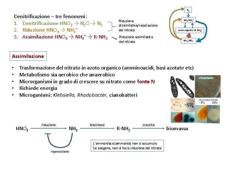 N 2 Denitrificazione – tre fenomeni: 1. Denitrificazione HNO 3 → N 2 O