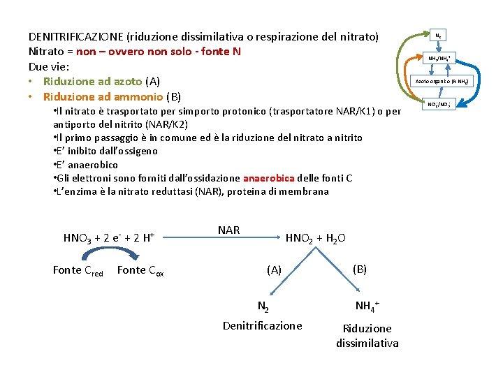 DENITRIFICAZIONE (riduzione dissimilativa o respirazione del nitrato) Nitrato = non – ovvero non solo